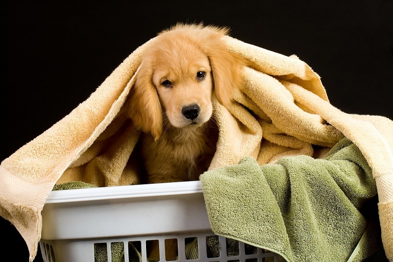 wash blankets with dog hair